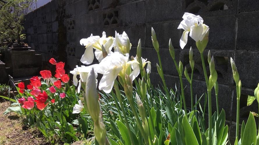 庭の花たちがきれいに咲きました♪