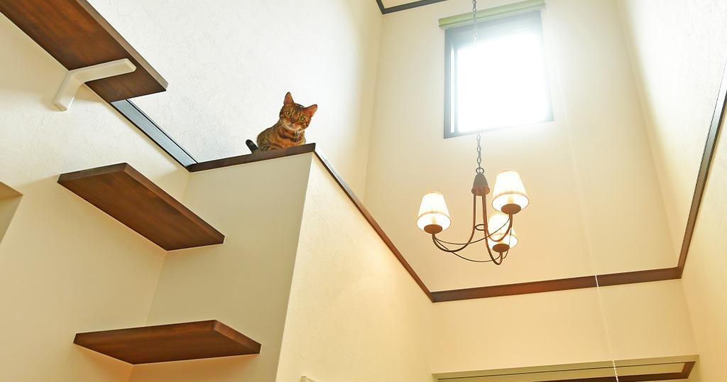 完成見学会/ネコちゃんと暮らす2階リビングのNatural House